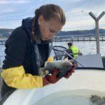Kvinne undersøker en fisk foran en merd